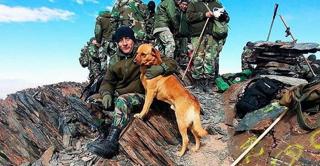Ordu tarafından, köpek Cabo'ya 'çavuş' rütbesi verildi