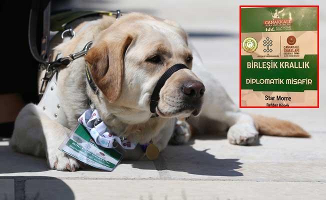 Star Köpek, 'Diplomatik Misafir' olarak ağırlandı