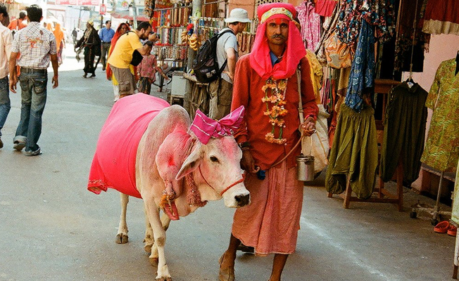 Hindular, kutsal saydıkları inekleri satıyorlar