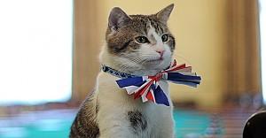 Dışişleri Bakanlığı bu kediye emanet