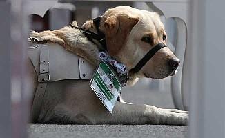 'Diplomatik Misafir' köpek için Büyükelçi'den teşekkür