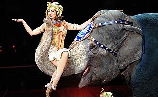 Yabani hayvanların bulunduğu sirkler yasaklandı