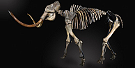 Dev mamut rekor fiyata alıcı buldu