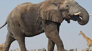 Fillerin neslinin 100 yıl ömrü kaldı