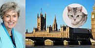 Parlamentonun kadrolu bir kedisi olacaktı ama...