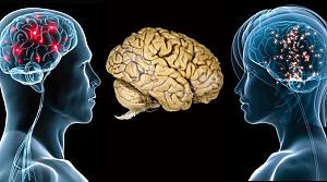 Kadın beyni erkek beyninden farklı