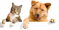 Kedi ve köpek yemenin yasaklanması istendi