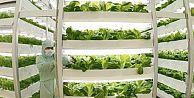 Uzayda sebze yetiştirecekler