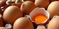Yumurta zarı yaraları geçiriyor