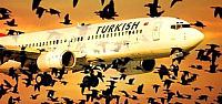 Kuş sürüsü yolcu uçağını geri döndürdü