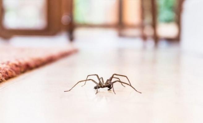 Örümcek korkusu olan Avustralyalı, cinayetten şüphelenen polisi alarma geçirdi