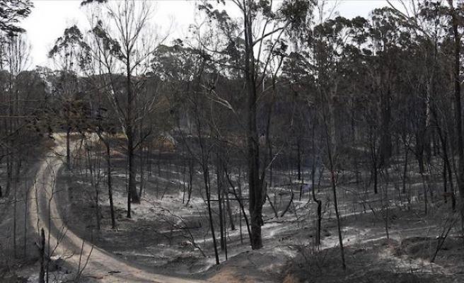 Avustralya'daki yangınlar aylar sonra kontrol altında