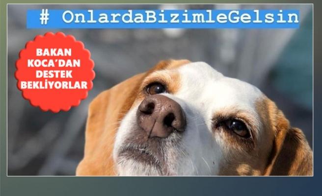Sağlık Bakanı Koca'ya Yurtdışından 'Evcil Hayvan' Çağrısı