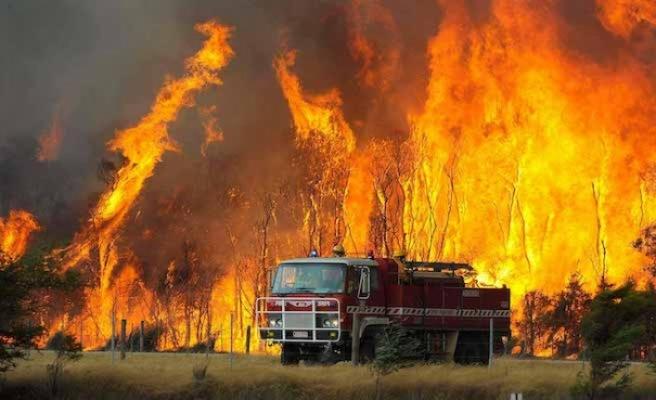 Avustralya'daki yangınlardan 3 milyar hayvan etkilendi