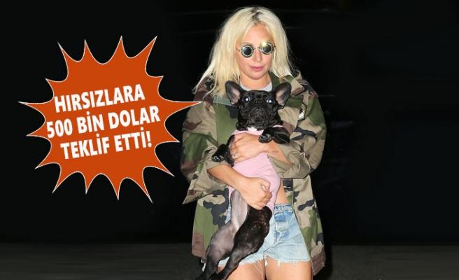 Lady Gaga, Köpeği İçin Paraya Acımadı