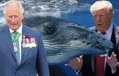 Donald Trump'ın Büyük Gafı Alay konusu Oldu!