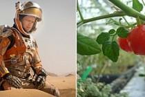 Mars'ta domates, roka ve turp yetiştirecek!