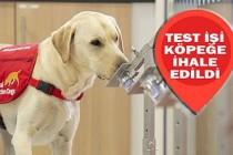 Kovid-19 Testi İçin Köpekler İşbaşında