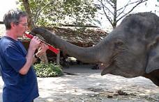 Paul Barton: Gözleri görmeyen yaşlı fillere çalan piyanist