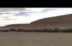 Ordudan, köpek Cabo'ya 'Çavuş' Rütbesi töreni