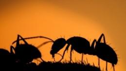 Karıncaların gözden uzak yaşamı
