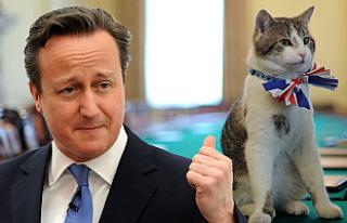 Cameron, Larry kedi selfiesini kitabına saklıyor