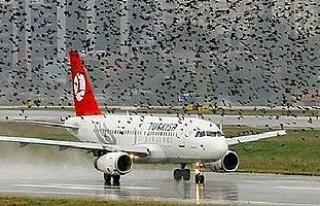 THY uçağının motoruna kuş girdi