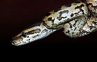 Kendi kendini yiyen yılan
