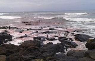 Yeni Zelanda'da 51 balina daha kıyıya vurdu
