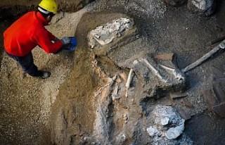 Pompeii'de taşlaşmış at bulundu