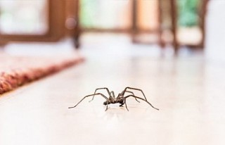 Örümcek korkusu olan Avustralyalı, cinayetten şüphelenen...