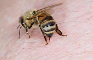 Tayvanlı bir kadının gözünden dört canlı arı...
