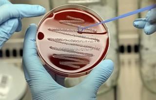 İngiltere'de öldüren bakteri 12 can aldı