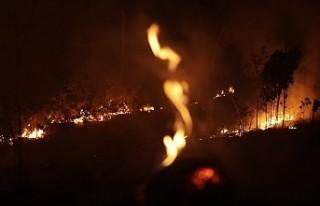 Amazon ormanlarındaki yangınlara tepki