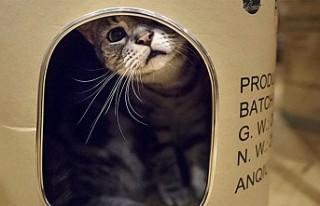 Kedisi 'şişko olduğu için' uçağa alınmadı...