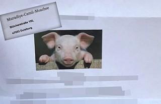 Almanya'da camiye domuz fotoğraflı hakaret...