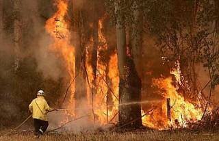 Avustralya'daki yangınlarda ölü sayısı 23'e...