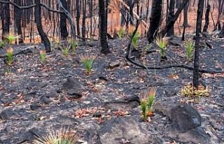 Avustralya'daki yağmurlar yangınların üçte...