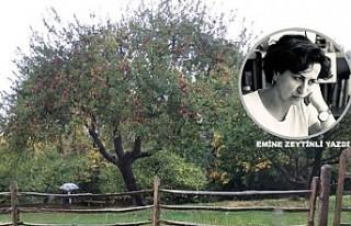 Newton, Elma Ağacı ve Işığı