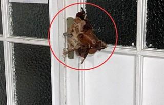 Almanya'da Cami Kapısına Domuz Kafası Asıldı
