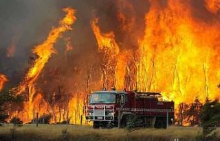 Avustralya'daki yangınlardan 3 milyar hayvan...