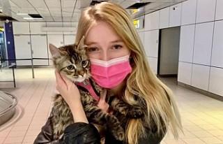Hollanda'da Kaybolan Kedi Belçika'da Bulundu