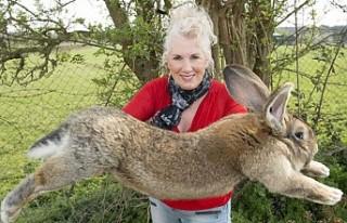 Dünyanın En Büyük Tavşanını Çaldılar
