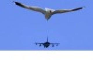 Kuşlar uçaklara en çok ABD'de çarpıyor