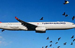 THY uçağı kuş sürüsüne çarpınca geri döndü
