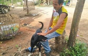 Annesi tarafından canlı canlı gömülen bebeği köpek kurtardı