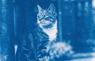 Bu kediler 120 yıl önce poz verdiler!