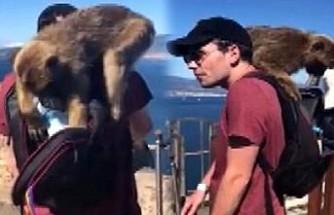 Düğün öncesi tura giden genç çifte, maymunlar saldırdı