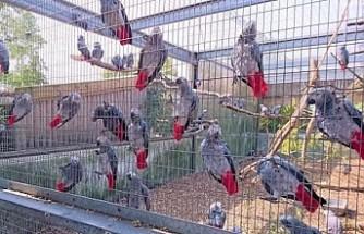 İngiltere'de beş papağana küfür cezası